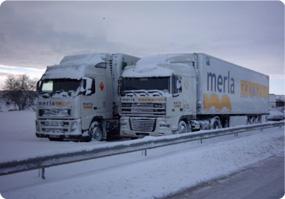 merla6
